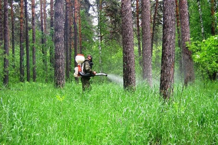 Обработка от клещей лесных массивов в Орле